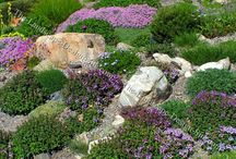 Gardening: Rockery ideas