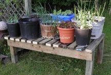 In My Garden / plants, seeds, veggies, and more that grow in my garden