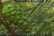 Turpentine Oil Indonesia