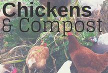 Chicken, compost
