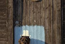 Ötletek kutyáknak