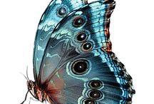 Pillangók.