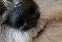 dogs noses