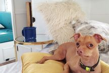 Los Angeles Dogs / Find photos, news and events on dogs in Los Angeles.  http://www.thisdogslife.co/locations/los-angeles/
