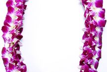 Graduation / The Hawaiian tradition for the graduate is to gift them with as many fabulous leis as they can wear. It is a beautiful sight! With that in mind, choose from any of our wide varieties of leis. This tradition has grown far and wide throughout the United States and is now one of the busiest times of year for our lei makers. Order early for best selection.
