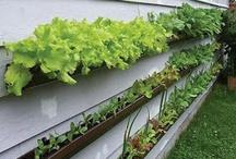 Garden / Garden - ideas