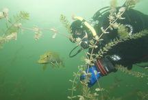 Artykuły divers24 / Najlepsze artykuły o nurkowaniu