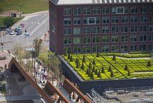 Inspiratie groene daken / inspiratie voor groene daken. Met heel veel voorbeelden uit de gemeente 's-Hertogenbosch.  Wist je dat de gemeente subsidie verleend op groene daken? Wist je dat de gemeente zelf al meer dan 13.000 m2 groene daken aanlegde op haar kantoren, scholen en sporthallen?