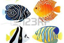 Voorbeelden vissen en..