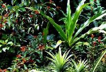 Cottage Garden/Wildlife: TampaLandscapeDesign.com