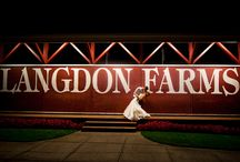 Langdon Farms wedding / Wedding, photography, rustic, Langdon farms, golf club / by Kellie Betcher