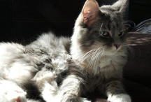 my cats - Mruczalscy*PL / Cats, kittens, cat, kitten, cat lovers, cat 's world