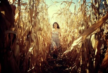 Cornfield Shooting Ideas