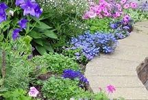 Gardens / Flowers and others