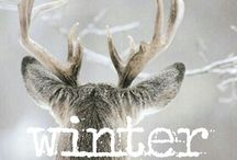 Winter / by Linda Gano