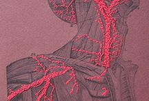 Aesthetic anatomy