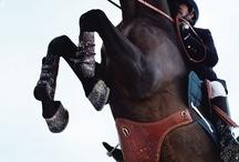 equitation plus qu'une passion