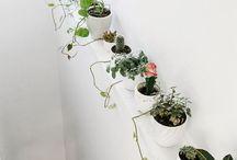 Plantas / Fotos de plantas para decorar el hogar.