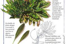 les couleurs issues des plantes leurs histoires à travers les ages