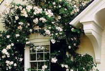 Fine roser og andre spesielle blomster