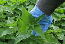 Tecniche di difesa naturali per orto