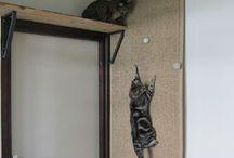 TODO para el gato