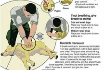 CPR / LEARN HOW TO PERFORM CPR ON YOUR DOG