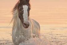 Koně pro Esterku