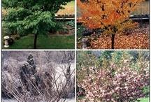 Teaching seasons