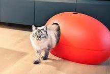 Acessórios animal (gato)