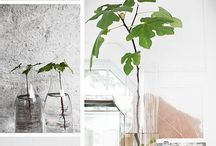Plant Inspiration (Green Home)