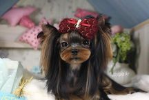 too cute / too cute<I love sausage doggies and other kinds...I've got a long haired sausage doggie and she's too cute
