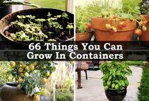 Planter og spirer