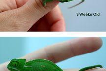 Chameleon things