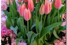 Virágok csokrok