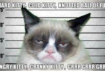 LOL / humor / by Katie Spain