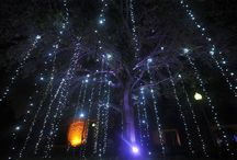 Best Christmas Lights / Best places to see amazing Christmas lights