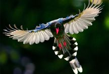 Exotic Birds / by Tracy Philbeck