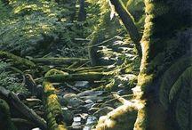 Art - Watercolor - Carol Evans