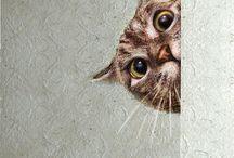 Koty i kociaki