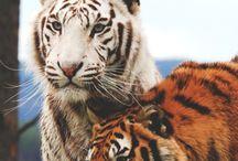 Animales / Naturaleza
