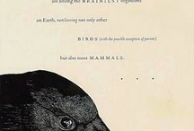 Crows, Ravens, Rooks and Blackbirds