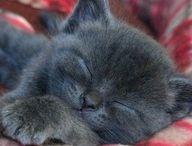 kitties / by Jym-Ann Curtis
