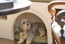 Living with Pets / by 1912 Bungalow