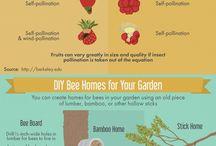 Garden and bee