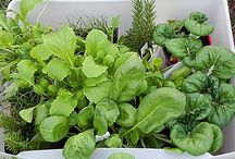 Kitchen herbs / gardens