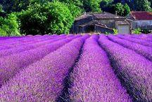 Simply Beautiful / Beautiful pics. Nature is wonderful / by Clara Bellino