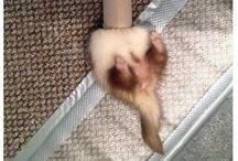 Ferrets :))
