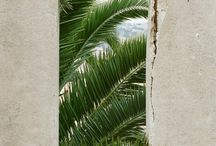 palm tropical