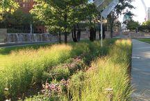 Garden Ideas / by Kristin Hickey-Heydt
